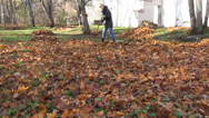 Stock Video Footage of girl rake autumn leaves