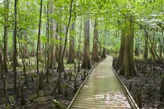 congaree national park - stock photo
