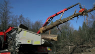 Stock Video Footage of Crane inserting a tree into the chopping machine