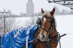 blue horse  - stock photo