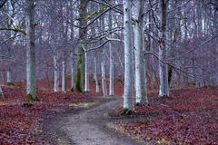 Park with aspen trees Stock Photos