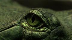 Macro eye of crocodile Stock Footage