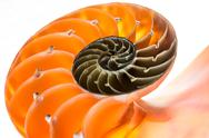 Stock Photo of nautilus shell isolated