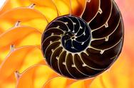 Stock Photo of nautilus shell section