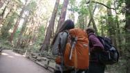 Stock Video Footage of Hiking couple in forest Redwoods, San Francisco