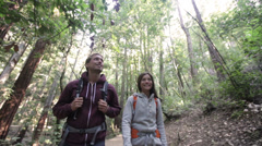 Hiking people in forest Redwoods, San Francisco Stock Footage