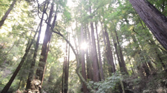 People in walking in forest, Redwoods Stock Footage