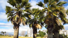 Palms in a windy day Stock Footage