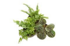 house plants with green leaves in  pot (top view) - stock photo