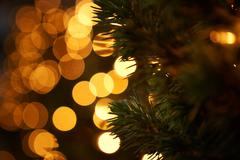 Bright holiday christmas lights with pine tree branch silhouette Stock Photos