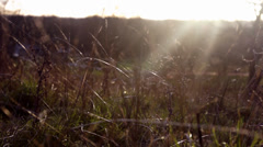 Hazy sunlight and wind through wild grass Stock Footage