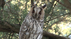 Owl in tree Stock Footage