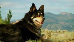 Dog relaxing by the mountains Stock Footage