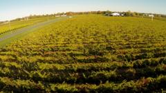 Rural Aerials - Vineyard (winery) 03 Stock Footage