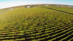 Rural Aerials - Vineyard (winery) 08 Stock Footage