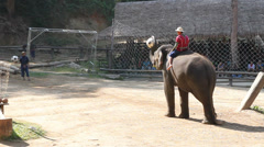 CHIANG MAI, THAILAND- December 26: Elephants show Stock Footage