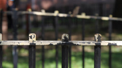 Old metal fence on urban street - stock footage