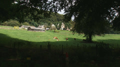 Veluwe farmhouse on hillside pan beech lane in forest, in shade. Stock Footage