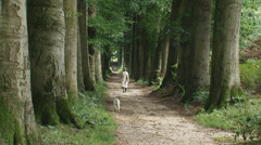 Dog walker on monumental beech lane Stock Footage