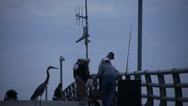 Stock Video Footage of Blue Heron and Fishermen