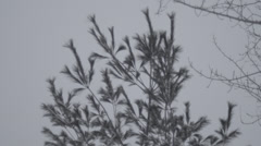 Pine treetop sheds snow 120fps Stock Footage