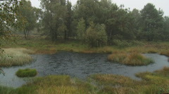 Rain shower in shallow puddle or fen in forest Stock Footage