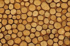 wood grain in cut timber logs - stock photo