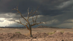 Storm Dead Hanging Tree Epic Wilderness Stock Footage
