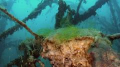 Underwater huge tree Stock Footage