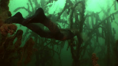 Underwater freedive man between huge trees Stock Footage