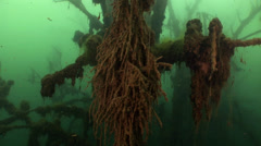 Underwater forest Stock Footage
