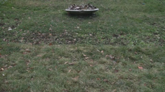 Pan Shot Of A Nice Frozen Patch Of Grass And Flowers In Cismigiu Park Stock Footage