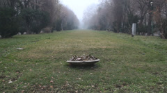 Still Shot Of A Nice Frozen Patch Of Grass And Flowers In Cismigiu Park Stock Footage