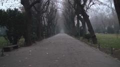Still Shot Of A Misty Alley In Cismigiu Park Stock Footage