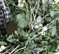 modern eucalyptus wreath - stock photo