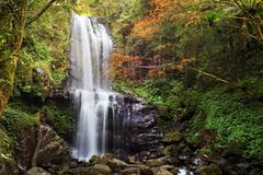 Waterfall with nice maple tree for adv or others purpose use - stock photo