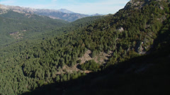Aerial corsica mountain forest Stock Footage