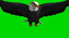 bald eagle in flight - seperated on green screen - stock footage