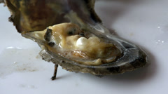 Oyster with a pearl Stock Footage