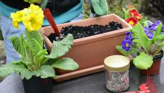 Potting soil accumulate with horn shavings to plant primroses Stock Footage