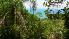 Ocean through the Trees Stock Footage