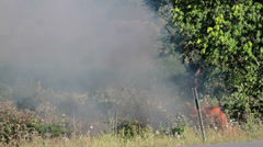 Stock Video Footage of Brush Fire, Early Moments