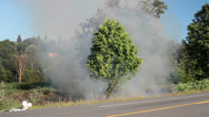 Stock Video Footage of Roadside Brush Fire