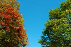 colorful maple leaf and sky - stock photo
