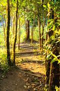 Garden path way Stock Photos