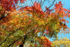 autumn color - stock photo