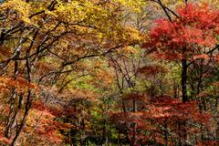colorful forest - stock photo
