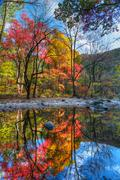 beautiful color reflection - stock photo