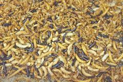 worms - stock photo