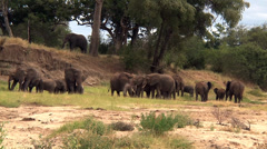 Elephant herd and behavior Stock Footage